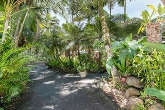 20B Greenhills Road, Kuranda, Qld 4881 2 Homes on 1.8 ac; Stunning Tropical Gardens; Rock Walls; Sheds; Private Location